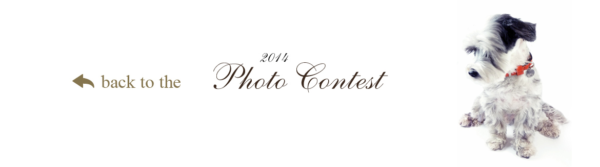 Back to Contest Page