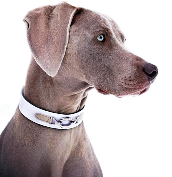 22852ec7a Hartman & Rose - Luxury Dog Products | Hartman & Rose